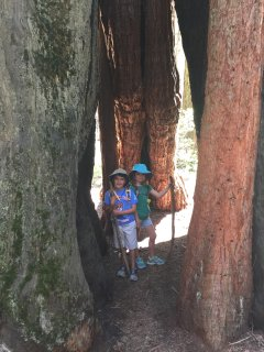 Chimney Tree, Nelder Grove