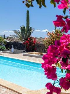 Buganvillas and cactus