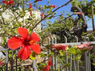 Casa Vacanze da Sonia, villetta con giardino
