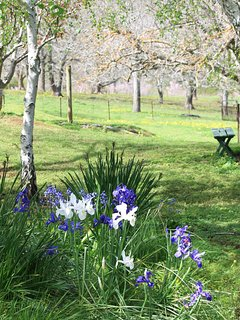 Cottage garden - irises