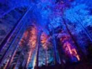 Enchanted Forest - every October