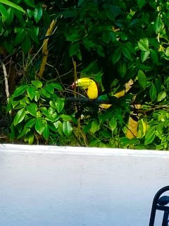 Not only daily monkey visits! Spot incredible exotic wildlife from the terrace of the property!