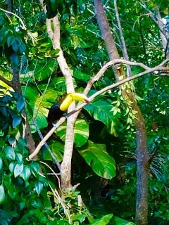 Yes, that is a toucan!