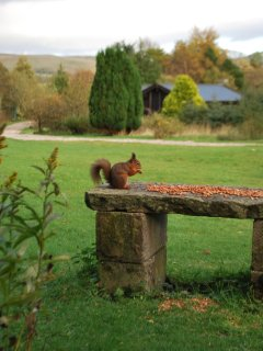 Rare Red Squirrels feed regularly close to the lodges as well as an abundance of bird and wild life