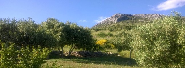 The Garden of Elaïs - Olive's tree
