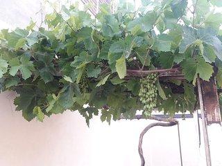 Casita planta baja, acojedora y con encanto. Gran patio trasero con césped artif