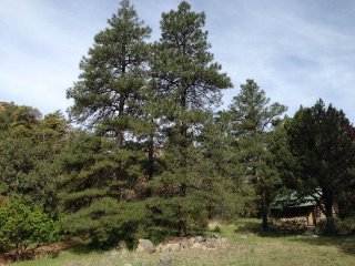 Lovely cabin nestled in the pines of Oak Creek Canyon SHANGRI LA - S058