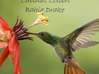 Cabinas colibri
