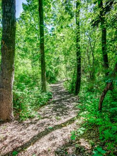 Take a hike! Plenty of paths through the woods to explore