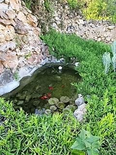Goldfish pond in the corner of the garden