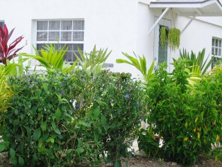 Palm Paradise Guesthouse and 2 Apartments Paynes Bay, Barbados
