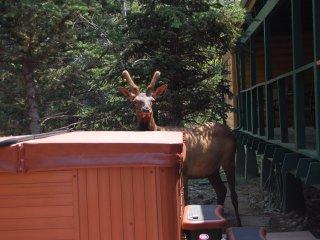 Dancing Bears, Awesome River Home, Mountain Views, Hot Tub, 5 Bedroom/4Bath