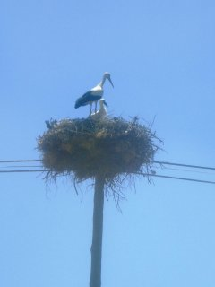 Meet the neighbours. Vale da Cegonha. 'Valley of the storks?