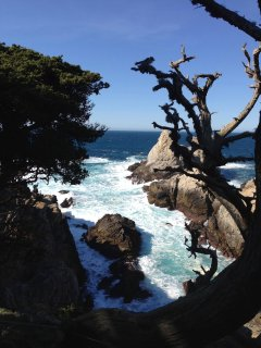 Point Lobos is one of the most dramatic places to visit on the planet.