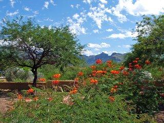 Luxury Tucson Condo in Catalina Foothills