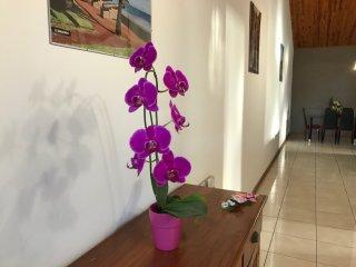 Villa des mimosas, SPA