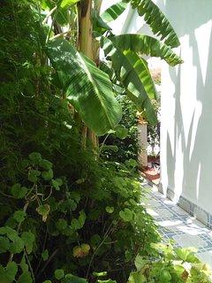 Pequeño jardín privado al lado del porche y de la casa