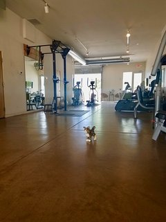 'I am a bit kitty, only this big gym makes me look small' - Artyard Kitty