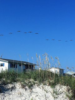 Pelicans fly like stealth bombers over the cottage in the morning and evening!