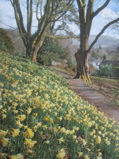 Rydal Mount 'Dpra's Field' wild daffodils, Lake District UNESCO World Heritage designated site.