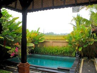 Salaoni Villa Ubud Private Pool Ricefield View
