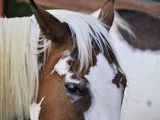 Horse Farm Retreat Loft