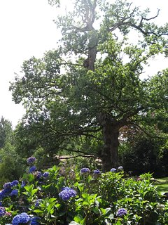 The oak outside the gite is around 500 years old.