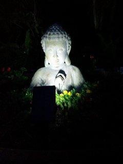 Back yard Buddha.