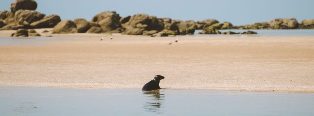 Monk Seal Chausey