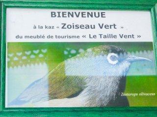 LE TAILLE VENT T3 Caz Zoizeau Vert