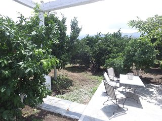 OREANGE TREE FARM SKINES (COUNTRY HOUSE )
