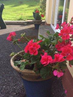 The garden is full of flowers