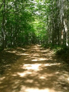 The kms of leaf canopy covered roads that loop around the tenting facility.