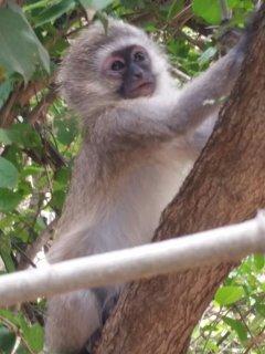 Monkey visiting