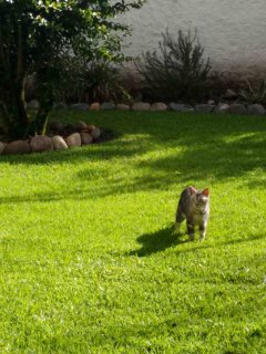 Our sweet cat, River, exploring the private backyard.