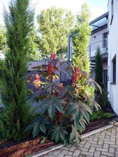 A l'Ancien Moulin - Arbres centenaires, jardin et ruisseaux