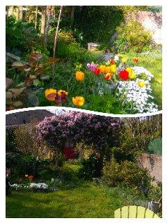 Le printemps dans notre jardin !!!