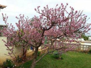 Flores de Erika- Magnolia