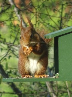 Our squirrel...