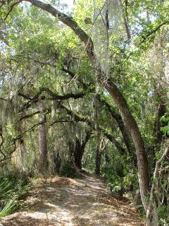 Get out of the sun on this shady, moss-draped nature trail.