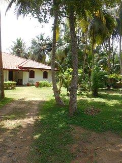 Coconut Treehouse
