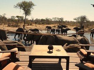 South Okavango | Omogolo Bush Lodges - Best close-up elephant observations!