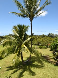 Kohala Country Haven Shared Grounds