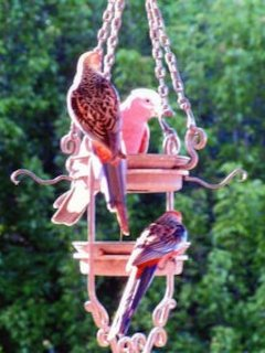 Local birdlife. Many birdfeeders to observe