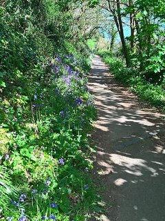 Beautiful approach to Moulin Huet beach - spring flowers in bloom Easter 2017