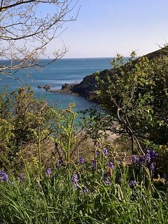 Bluebells above Saints Bay