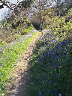 Beautiful bluebells in bloom early Spring