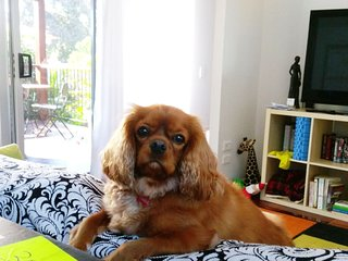 Happiness Cottage Brighton Brisbane North. Free unlimited wifi. Pet friendly.