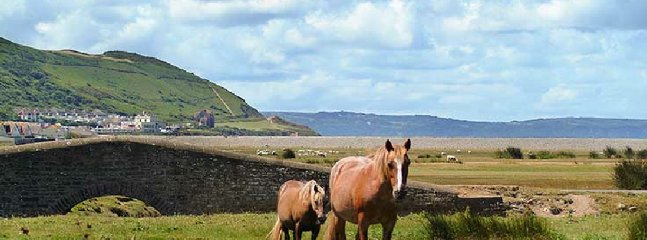 Horses, Northam Burrows and the Golf club