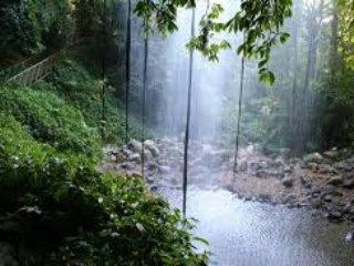 Crystal Falls Dorrigo
